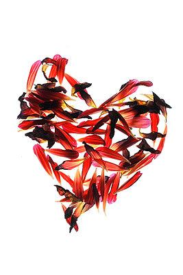 Herzform - p450m1052007 von Hanka Steidle
