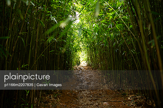 Arch Muddy Path Through Green Bamboo Forest in Maui - p1166m2207835 by Cavan Images