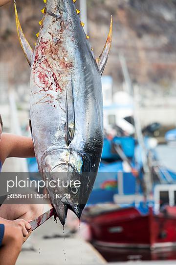 Predatory fish - p958m1115941 by KL23