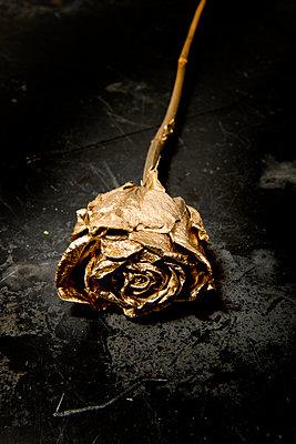 Golden rose - p451m908131 by Anja Weber-Decker