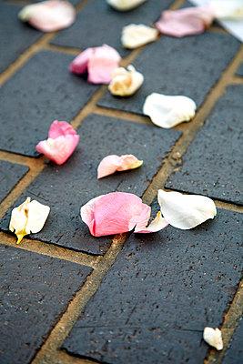 Rose petals - p6600041 by Eva Häggdahl