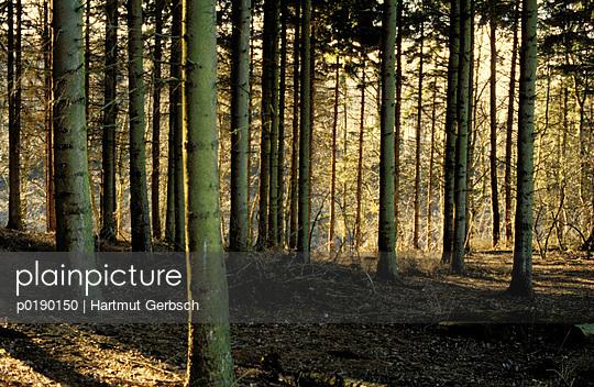 Idylle im Wald - p0190150 von Hartmut Gerbsch