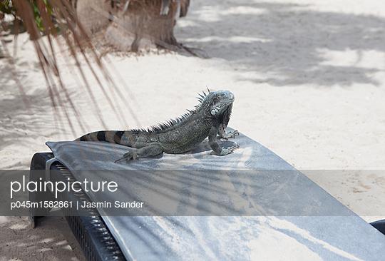 Leguan liegt bequem auf Sonnenliege - p045m1582861 von Jasmin Sander