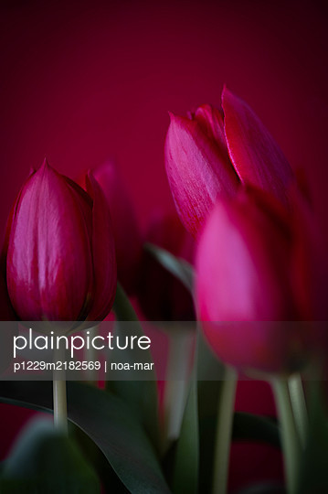 Bunch of pink tulips, close-up - p1229m2182569 by noa-mar