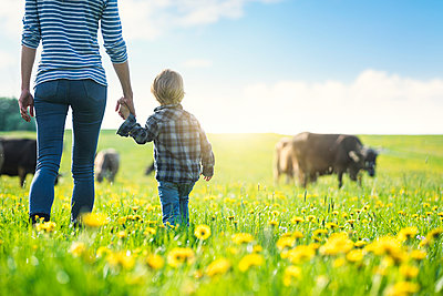 Mother and son holding hands and looking at cows grazing on a meadow with dandelions - p300m2081265 von Steve Brookland