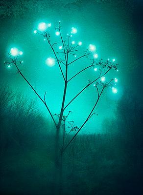 Magical - p984m702457 by Mark Owen