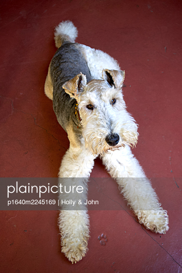 Terrier - p1640m2245169 by Holly & John
