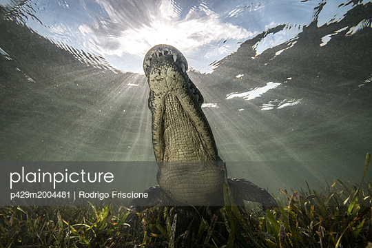 p429m2004481 von Rodrigo Friscione