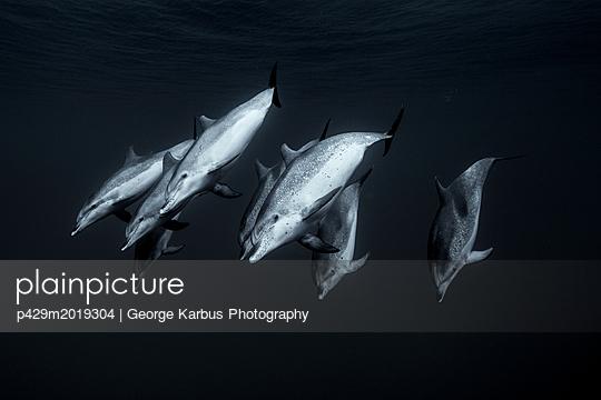 p429m2019304 von George Karbus Photography