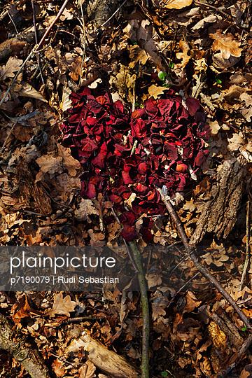 Rose petals - p7190079 by Rudi Sebastian