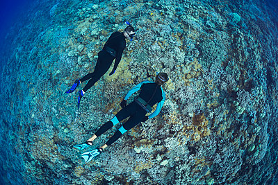 Two men free diving over a Hawaiian hard coral reef; Hawaii, United States of America - p442m2032317 by Dave Fleetham