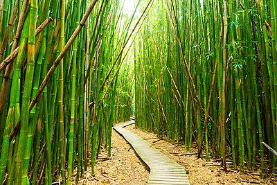 Hawaii, Maui, Kipahulu, Haleakala National Park, Boardwalk Through Bamboo Forest On The Pipiwai Trail - p442m934948 by Makena Stock Media