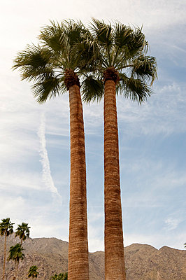 Palm trees in Palm Springs - p8000032 by Emma McIntyre