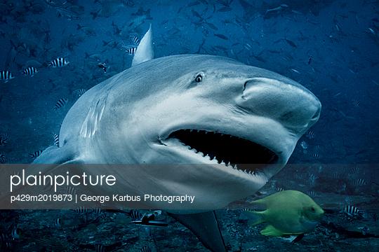 p429m2019873 von George Karbus Photography