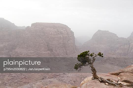 Einzelner Baum am Hang im Gebirge in Jordanien - p795m2030822 von Janklein