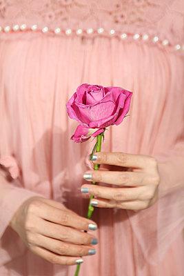 Rose in Hand halten - p045m2179064 von Jasmin Sander