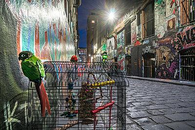 Melbourne Nightscape - p1275m2032057 von cgimanufaktur
