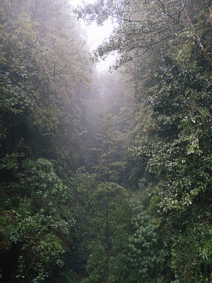 Portugal, Madeira, Foggy forest - p1600m2175711 by Ole Spata