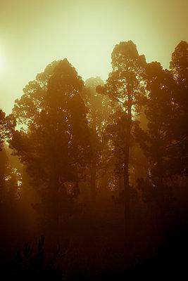 Wald - p958m1110668 von KL23