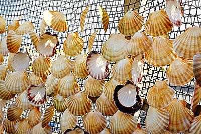 Muschelnetz - p1145m1590875 von Kerstin Lakeberg