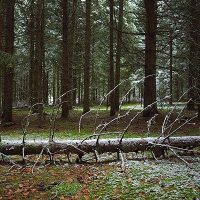 Forest in winter - p8130234 by B.Jaubert