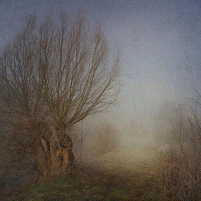 Willows on a Foggy Morning - p1633m2208839 by Bernd Webler