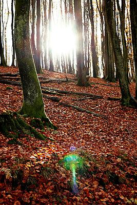 Wald - p2370473 von Thordis Rüggeberg