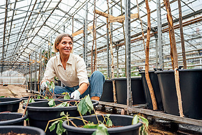 Smiling female farmer crouching by potted plant at greenhouse - p300m2300547 by Vasily Pindyurin