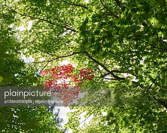Blätterdach - p133m2030958 von Martin Sigmund