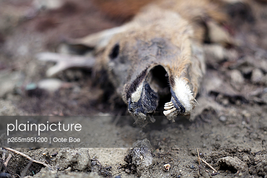 Totes Reh - p265m951200 von Oote Boe
