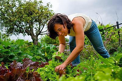 Happy female gardener harvesting fresh lettuce - p1579m2195709 by Alexander Ziegler