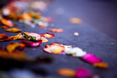 Blumen streuen - p7720083 von bellabellinsky