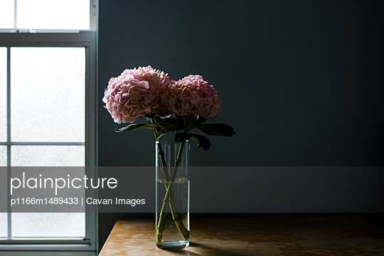Hydrangeas in drinking glass at table against wall