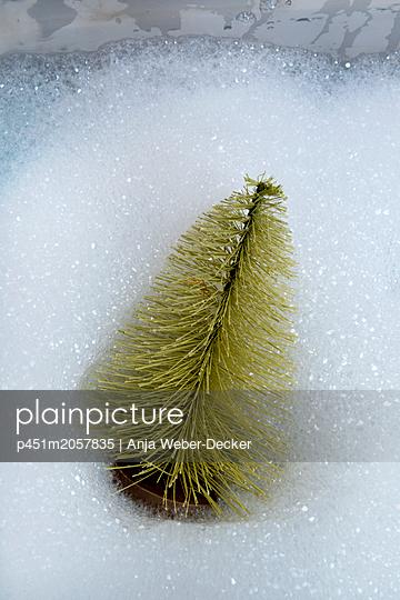 p451m2057835 by Anja Weber-Decker