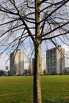 Local council flats & tree - p1048m1123522 by Mark Wagner