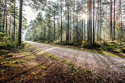 Wald - p947m945793 von Cristopher Civitillo