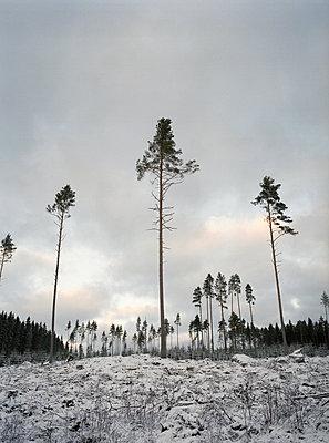 Waldsterben - p1313m1286567 von Leif-Erik Schmitt
