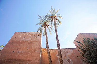 Old city fortification in Medina  with palm trees stretched to the sky - p1332m1528764 by Tamboly