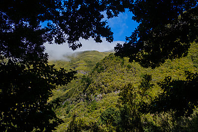 Portugal, Madeira, Forest area - p1600m2175607 by Ole Spata