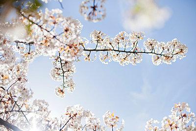 Frühling - p956m709714 von Anna Quinn