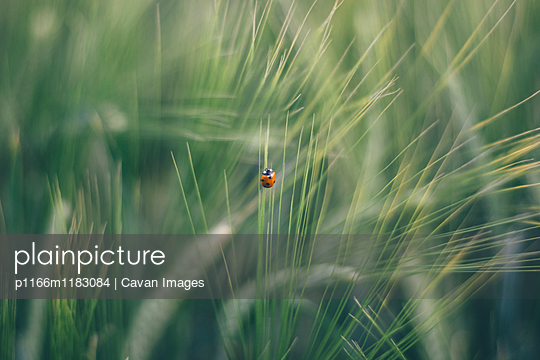 p1166m1183084 von Cavan Images