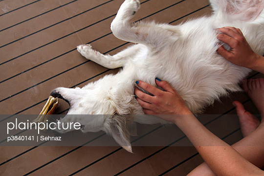 Dog playing - p3840141 by Sehnaz