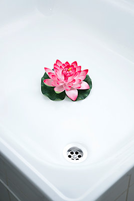 Water lily in the shower - p1149m1474882 by Yvonne Röder