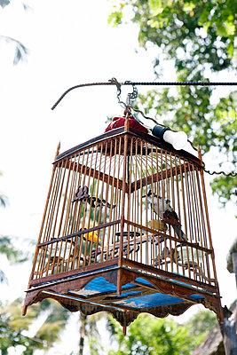 Birdcage - p4060219 by clack