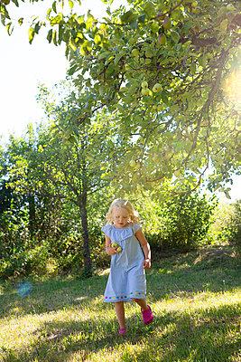 Picking apples - p454m2055707 by Lubitz + Dorner