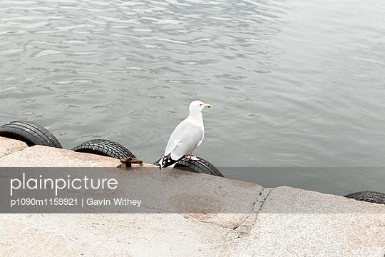 Einsame Möwe - p1090m1159921 von Gavin Withey