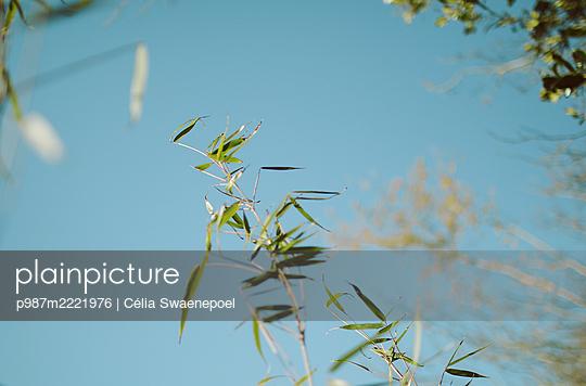 vert et bleu - p987m2221976 by Célia Swaenepoel