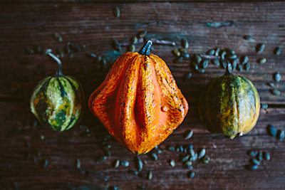 Orange Ornamental pumpkin - p300m1581377 von Giorgio Fochesato