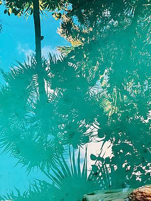 Palm trees - p988m2081980 by Rachel Rebibo