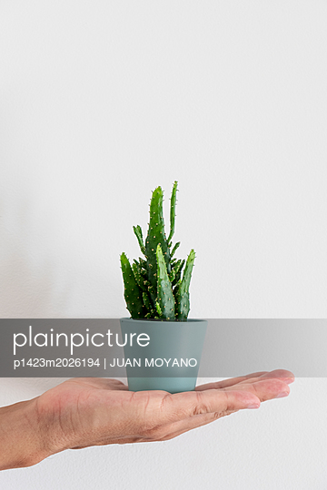 Hand with a cactus - p1423m2026194 by JUAN MOYANO